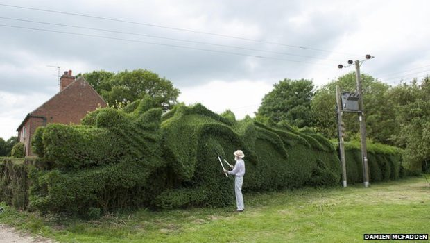 Il transforme sa haie de jardin en un dragon long de 45 m tres for Haie de jardin en belgique