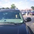 Ivre, il explique à la police que c'est son chien qui conduisait sa voiture
