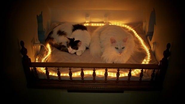 Il aménage sa maison de façon à en faire un paradis pour chats