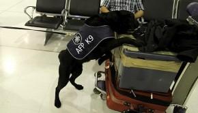 La police australienne oublie une valise bourrée d'explosifs