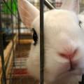 Un lapin déjoue un cambriolage en s'agitant dans sa cage