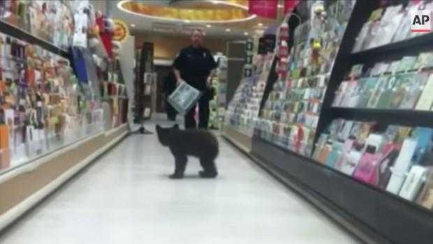Un ourson égaré se promène dans les rayons d'une pharmacie