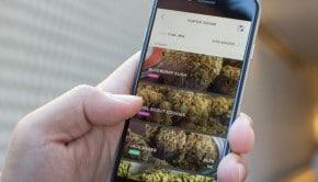 Une application mobile pour se faire livrer de la marijuana directement à son domicile