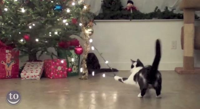 quand les chats s attaquent aux sapins de no l. Black Bedroom Furniture Sets. Home Design Ideas
