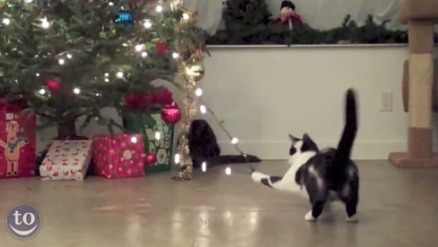 Quand les chats s'attaquent aux sapins de Noël