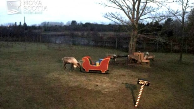 Un renne détruit le traîneau du père Noël