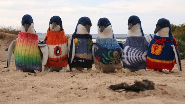 %C3%80-109-ans-il-tricote-des-pulls-pour-des-manchots-pygm%C3%A9es-victimes-de-mar%C3%A9es-noires-en-Australie-620x350
