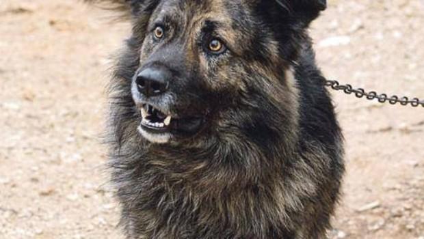 Un-tribunal-croate-interdit-%C3%A0-un-chien-daboyer-la-nuit-620x350