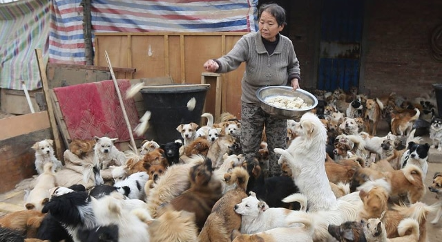 Ces cinq retraitées nourrissent à elles seules et chaque jour 1300 chiens