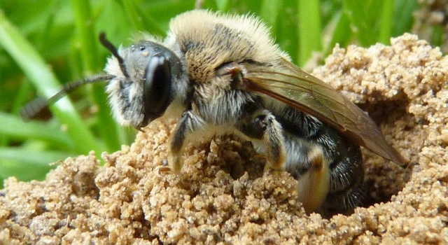 Des abeilles attaquent les passagers d'un bus après que l'un d'entre eux leur a uriné dessus