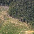 Un projet de reforestation à grande échelle grâce à des drones semeurs