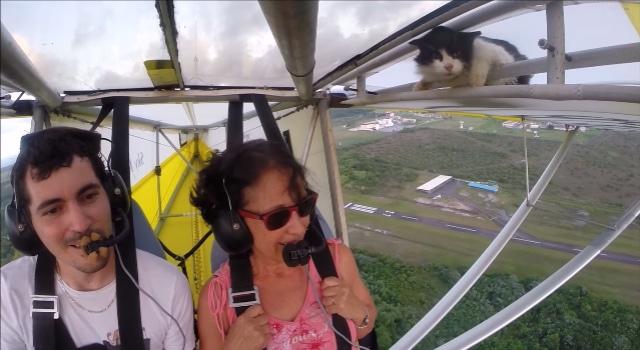 chat sur une aile baptême de l'air ULM en Guyane