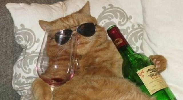 chat sauvé après avoir passé sept semaines dans cave à vin