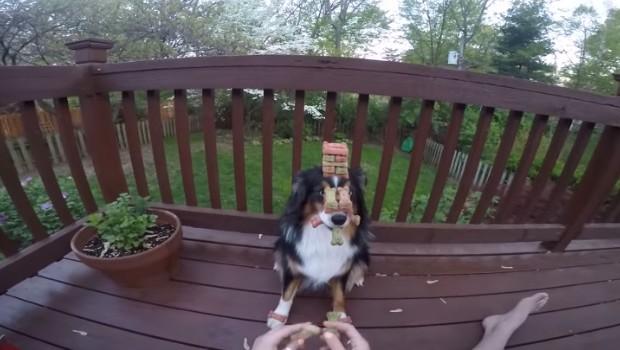 chien le plus patient au monde