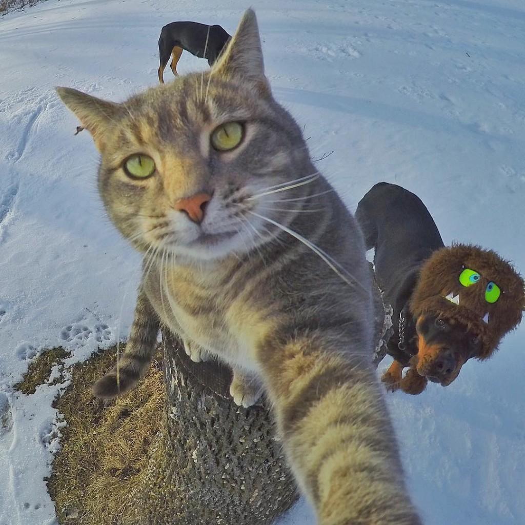 Manny le chat pro des selfies
