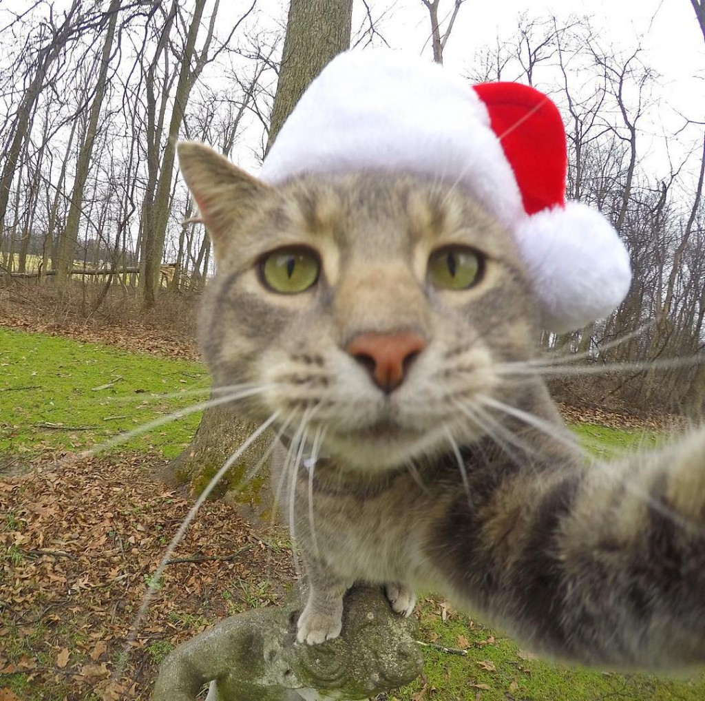 Chat accroc des selfies