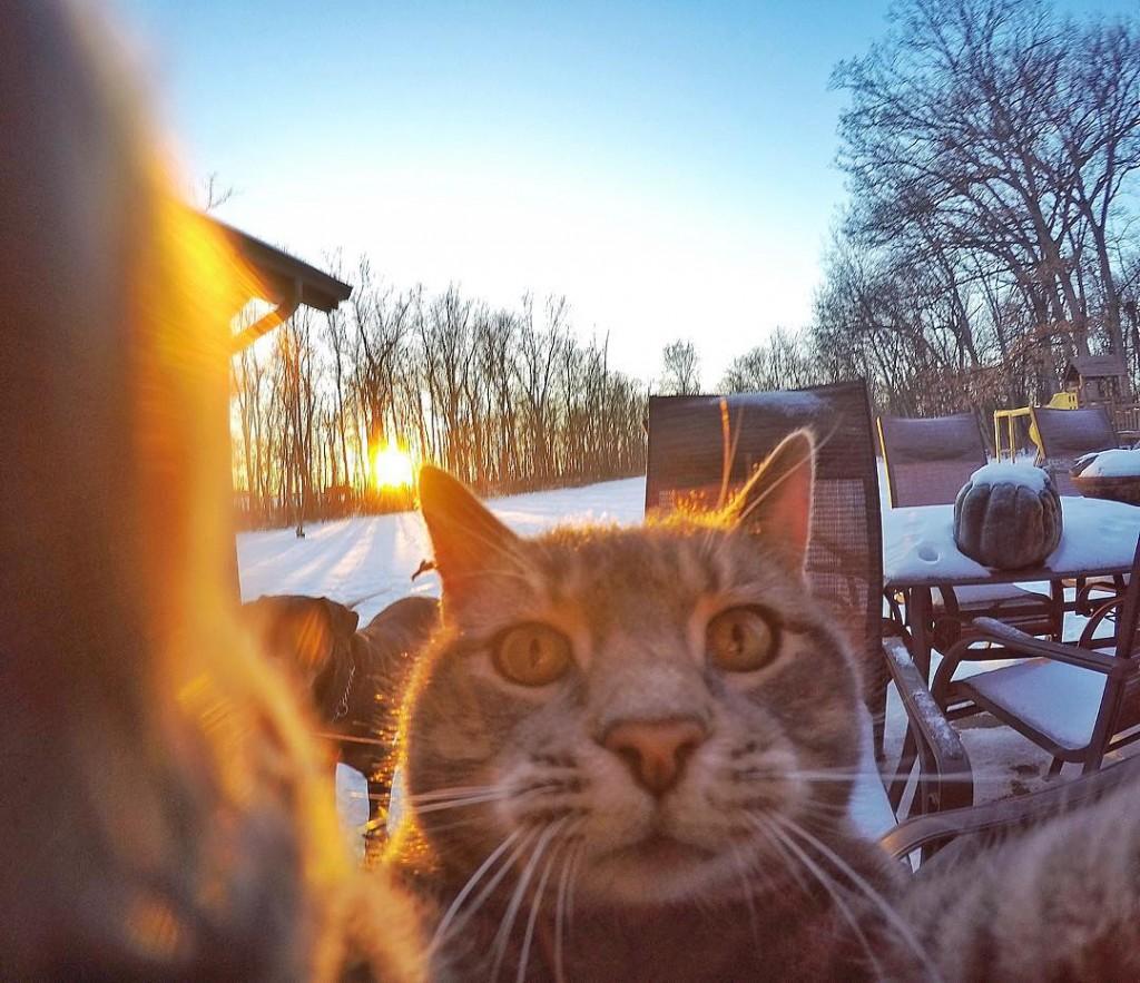 Manny chat faisant des selfies 2