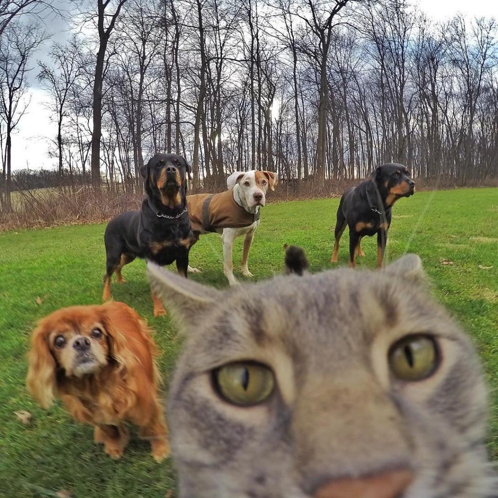 Manny chat pro des selfies avec son crew