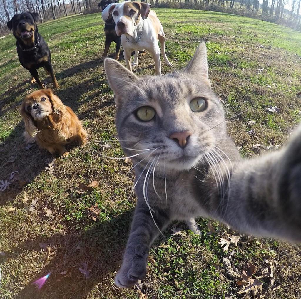 Manny est le chat pro des selfies
