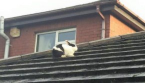 lapin envolé sur un toit après tempête