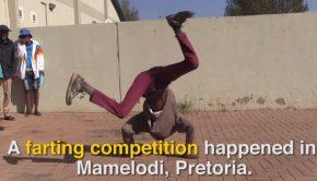 concours de pets en Afrique du Sud