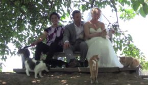 mariage avec 1100 chats à The Cat House on the Kings