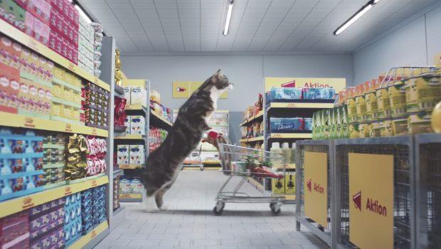 quand des chats font leurs courses dans un supermarch. Black Bedroom Furniture Sets. Home Design Ideas