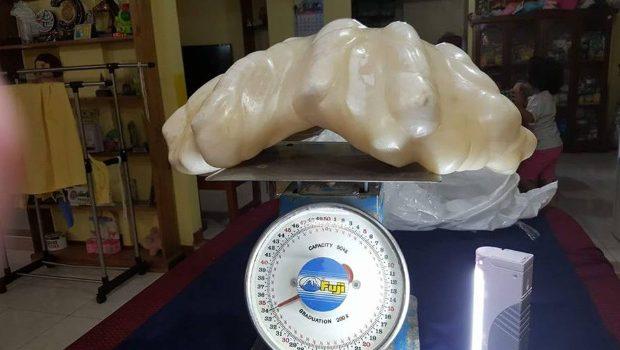 perle-de-34-kilos-gardee-sous-lit