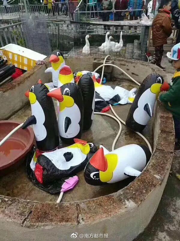 Pingouins en plastique au zoo
